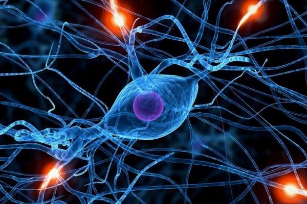 Блуждающий нерв и здоровье