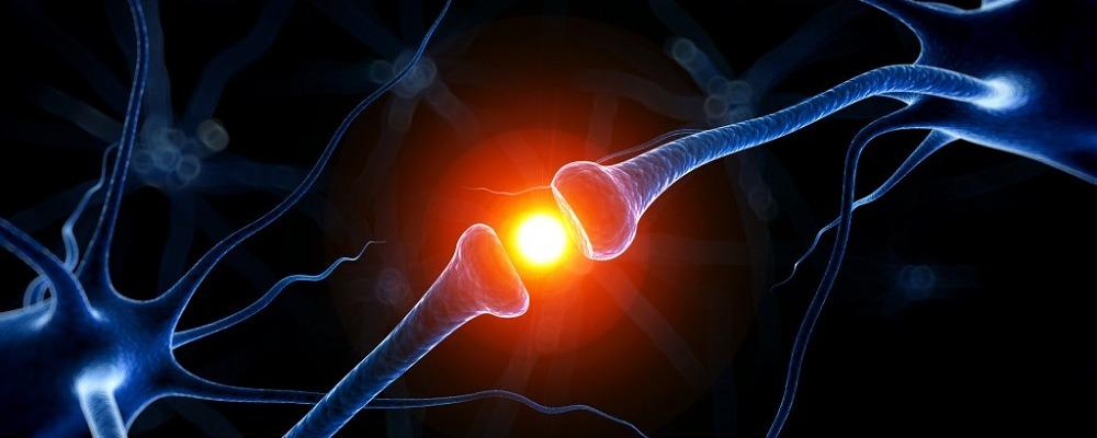 Блуждающий нерв и здоровье. Способы стимуляции блуждающего нерва
