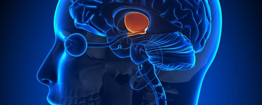 Блуждающий нерв и здоровье. Польза медитации и йоги