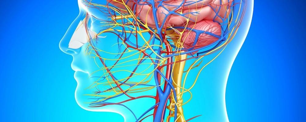 Блуждающий нерв и здоровье. Смех, молитва и электромагнитная стимуляция