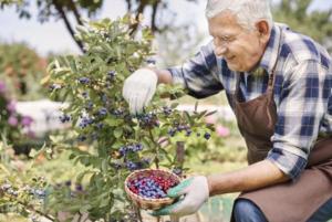 Пожилые люди садоводствоТелемедсестра